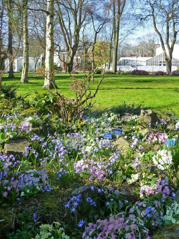 Bezoek de Botanische Tuin in Delft